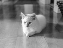Silhouette Photo of Cat Sitting on Floor Stock Images
