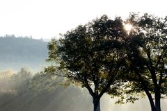 Silhouette Photo of Green Trees Under Crepuscular Rays Royalty Free Stock Images