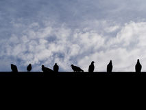 Silhouette photo of the rock dove pigeon birds sitting on the ro Royalty Free Stock Photo