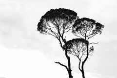 Silhouette Photo of Trees Royalty Free Stock Photo