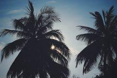 Silhouette Photo of Trees Royalty Free Stock Photos