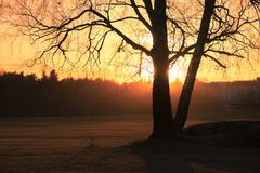 Silhouette Photo of Trees during Golden Hour Royalty Free Stock Photo