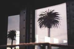 Silhouette Photo of Two Palm Trees Royalty Free Stock Image