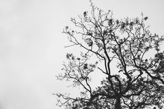 Silhouette Photo of Withered Tree Stock Photography