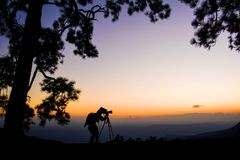 Silhouette photographer of pine trees forest with light during sunset. Winter season Royalty Free Stock Photo