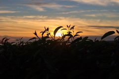 Silhouette Photography Of Plant During Golden Hour Royalty Free Stock Images