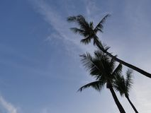 Silhouette picture of the coconut tree stock photo