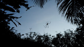 Silhouette picture of spider is on cobweb. Silhouette picture of spider is on cobweb against with blue sky and silhouette tree around. Concept of scary and Royalty Free Stock Photo
