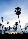 Silhouette picture of Sugar palm at sunset Stock Photography
