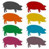 Silhouette of pig icons set. Vector icon Stock Images