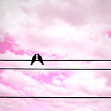 Silhouette pigeon couple feeling love on electric wire Stock Photography