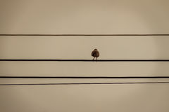 Silhouette pigeon perching on the electric cable in blue sky bac Royalty Free Stock Photo