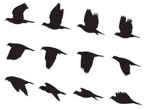 Silhouette Pigeons bird flying motion vector set Royalty Free Stock Photography