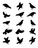 Silhouette of Pigeons Isolated on White Vector Royalty Free Stock Image