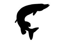 Silhouette of pike isolate. Black silhouette of pike on white royalty free illustration