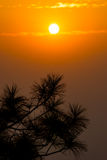 Silhouette pin tree in the morning sunrise Stock Photo