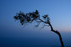 Silhouette of pine on the cliff Stock Photo