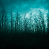 Silhouette of pine forest Stock Images