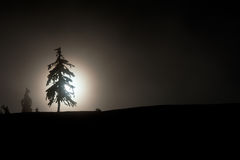Silhouette of a pine tree Stock Photography