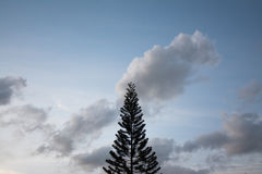 Silhouette of pine tree. Silhouette of pine tree with clouds sky background stock photography