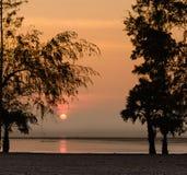 Silhouette Pine Tree and Sunrise on Morning Sea Stock Photo