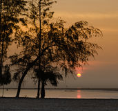 Silhouette Pine Tree and Sunrise on Morning Sea Stock Photography
