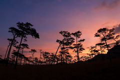 Silhouette of pine tree at sunset Stock Photo