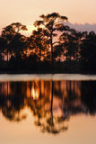 Silhouette of pine trees. Sillouette of pine trees and reflection in a river at sunset Stock Photos