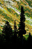 Silhouette Pine Trees Autumn Mountainside royalty free stock images