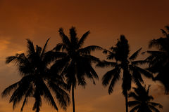 Silhouette of plam trees. Silhouette of plam trees with colourful sunset and twilight sky background Stock Image