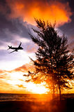 the silhouette of plane fly in sky over pine tree sea sunset and Royalty Free Stock Image