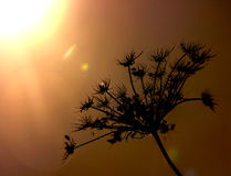 Silhouette of a plant in the sun Stock Image