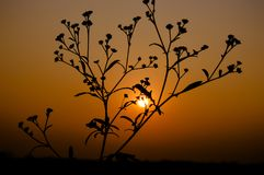 Silhouette of Plant during Sunset Royalty Free Stock Photography
