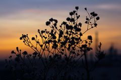 Silhouette Of Plants Stock Photography