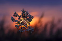 Silhouette plants flower against the setting sun Stock Photography