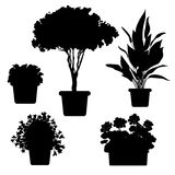 Silhouette plants and flowers in pot Stock Photos