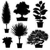 Silhouette plants and flowers in pot Stock Images
