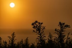 Early morning sunrise with yellow skies and silhouette of plants in the foreground royalty free stock photo