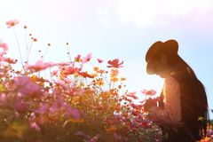 Silhouette portrait lady in flower field at sunrise,caucasian woman with pink cosmos flowers. Woman wearing dress relaxing and happy with smelling flower in Stock Images