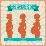 Silhouette of a pregnant woman in the three. Trimesters Royalty Free Stock Photography