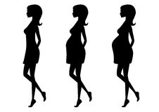 Silhouette of pregnant woman in three trimesters. Silhouette of a pregnant woman in the three trimesters. Pregnancy stages Stock Photos