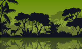 Silhouette rain forest with lake scenery Stock Photo