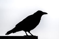 Silhouette Of A Raven Royalty Free Stock Image