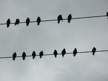 Silhouette of ravens on a telephone wire Stock Photos