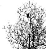 Silhouette ravens on tree. Isolated on white background Royalty Free Stock Photos