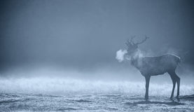 Silhouette of a red deer stag Royalty Free Stock Photography