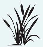 Silhouette reed Royalty Free Stock Photo