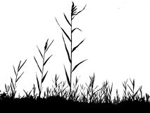 Silhouette of the reed royalty free illustration