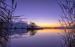 Silhouette of Reed at serene Lake during Purple Sunset Royalty Free Stock Photos