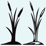 Silhouette reed Royalty Free Stock Images